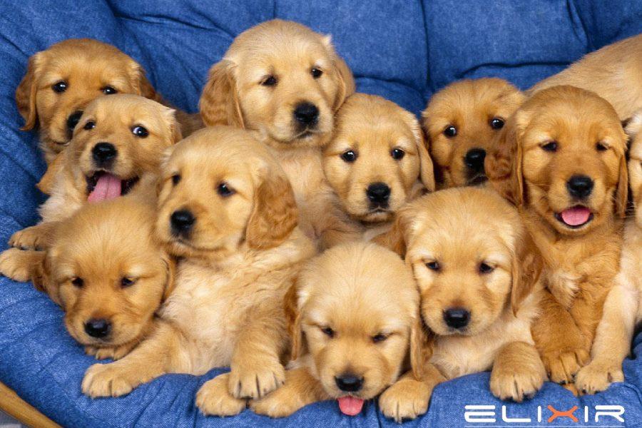 4η Οκτωβρίου-Παγκόσμια ημέρα των ζώων